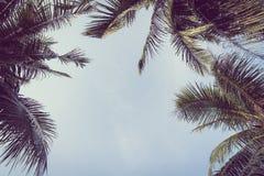 Kokosnoten plam boom met exemplaarruimte op hemel Royalty-vrije Stock Afbeelding