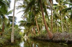 Kokosnotenaanplantingen Stock Fotografie