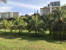 Kokosnotenboomgaard in een woonwijk royalty-vrije stock afbeeldingen
