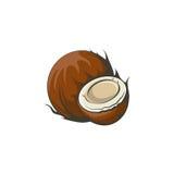 Kokosnotenillustratie Royalty-vrije Stock Foto