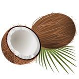 Kokosnotenillustratie op witte achtergrond vector illustratie