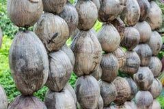 Kokosnotenomheining Stock Afbeelding