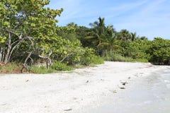 Kokosnotenpalm bij het strand van Moorea, glasheldere turkoois-blauwe Zuid-Pacifische oceaan stock foto's