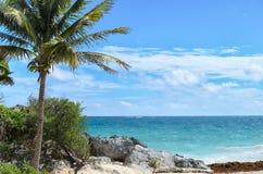 Kokosnotenpalm bij rotsachtig wit zandstrand op een winderige dag Stock Afbeeldingen