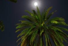 Kokosnotenpalm door Maanlicht 2 Royalty-vrije Stock Afbeeldingen