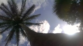 Kokosnotenpalm en hemel Royalty-vrije Stock Fotografie