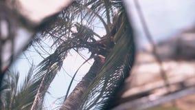 Kokosnotenpalm met bladeren en kabel die in spiegel wordt weerspiegeld stock footage