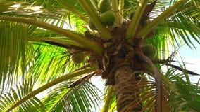 Kokosnotenpalm onder blauwe hemel, China stock videobeelden