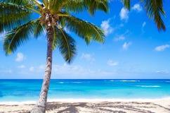 Kokosnotenpalm op het zandige strand in Hawaï Stock Foto