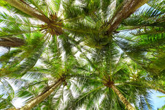 Kokosnotenpalmen Stock Foto's