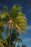 Kokosnotenpalmen bij leeg tropisch strand Stock Foto's