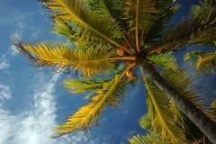 Kokosnotenpalmen bij leeg tropisch strand Stock Foto
