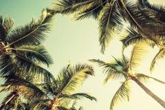Kokosnotenpalmen en glanzende zon over heldere hemel Royalty-vrije Stock Afbeelding