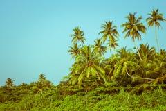Kokosnotenpalmen en mangrove in keerkringen Stock Afbeeldingen