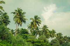 Kokosnotenpalmen en mangrove in keerkringen Stock Afbeelding