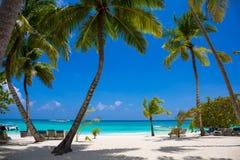 kokosnotenpalmen met blauwe hemel Royalty-vrije Stock Foto
