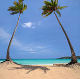 Kokosnotenpalmen op een tropisch eiland Stock Foto's