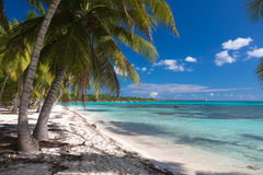 Kokosnotenpalmen op wit zandig strand in Saona-eiland, Dominicaanse Republiek Royalty-vrije Stock Afbeeldingen
