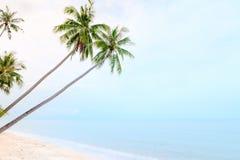 Kokosnotenpalmen op zandstrand en kalme overzees Stock Foto's