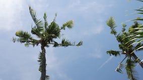 Kokosnotenpalmen tegen blauwe hemel op een tropisch eiland Bali, Indonesië stock videobeelden