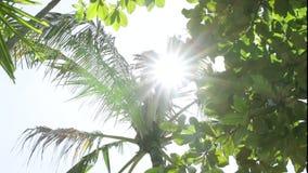 Kokosnotenpalmen tegen blauwe hemel op een tropisch eiland Bali, Indonesië stock video