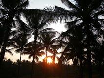 Kokosnotenpalmen tegen verbazende zonsopgang Stock Foto's