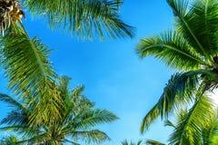 Kokosnotenpalmen Tropische achtergrond royalty-vrije stock fotografie