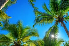 Kokosnotenpalmen Tropische achtergrond royalty-vrije stock foto's