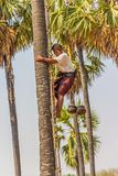 Kokosnotenplukker Stock Fotografie