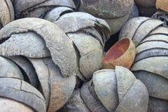 Kokosnotenshell Stock Foto's