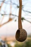 Kokosnotenshell dipper het hangen Royalty-vrije Stock Foto's