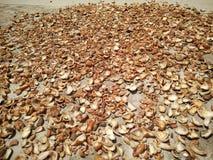 Kokosnotenvlees gemaakt onder de hitte van de zon droog Stock Foto's