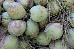 Kokosnotenvruchten Stock Foto's