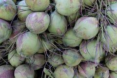 Kokosnotenvruchten Stock Afbeelding