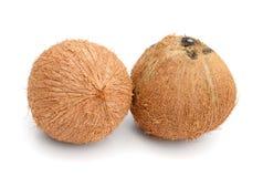 Kokosnotenvruchten over de bladeren royalty-vrije stock afbeeldingen