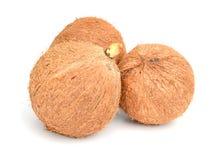 Kokosnotenvruchten over de bladeren royalty-vrije stock fotografie