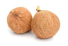 Kokosnotenvruchten over de bladeren royalty-vrije stock afbeelding