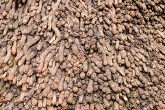 kokosnotenwortels Stock Fotografie