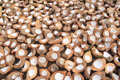 Kokosnüsse, die auf Sonne in Indonesien trocknen Lizenzfreies Stockfoto