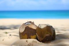Kokosnüsse im Sand Stockbilder