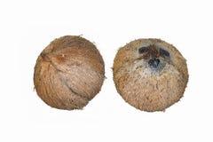 Kokosnüsse an lokalisiert auf Weiß Lizenzfreie Stockfotos