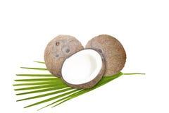Kokosnüsse mit grünem Blatt auf weißem Hintergrund Lizenzfreie Stockfotos