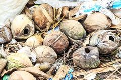 Kokosnüsse trocknen Stockbild