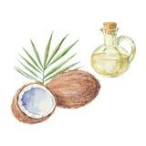 Kokosnöt och en flaska av teckningen för kokosnötolja vid vattenfärgen Hand Fotografering för Bildbyråer