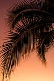 Kokosnötbladkontur med solnedgånghimmel Royaltyfria Bilder