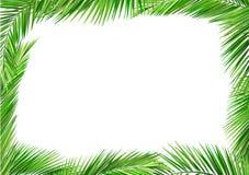 Kokosnöten lämnar för att inrama Royaltyfri Fotografi