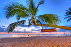 Kokosnötpalmträd på solnedgången på den Koh Kho Khao ön Arkivfoto