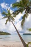 Kokosnötpalmträd över den tropiska vita sandstranden Arkivfoto