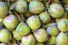 Kokosnötter i marknaden Royaltyfri Foto
