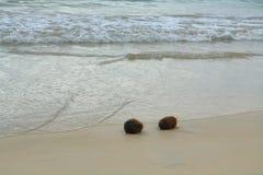 Kokosnötter i sanden på den Floreana ön Royaltyfri Bild